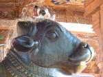 temple_bull_temple_nandi